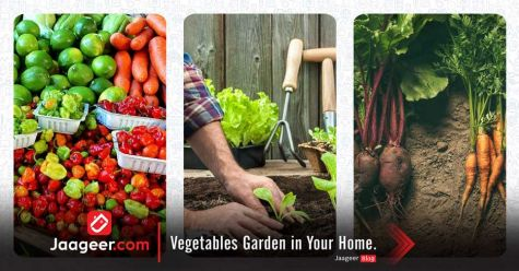 Vegetables Garden in Your Home.